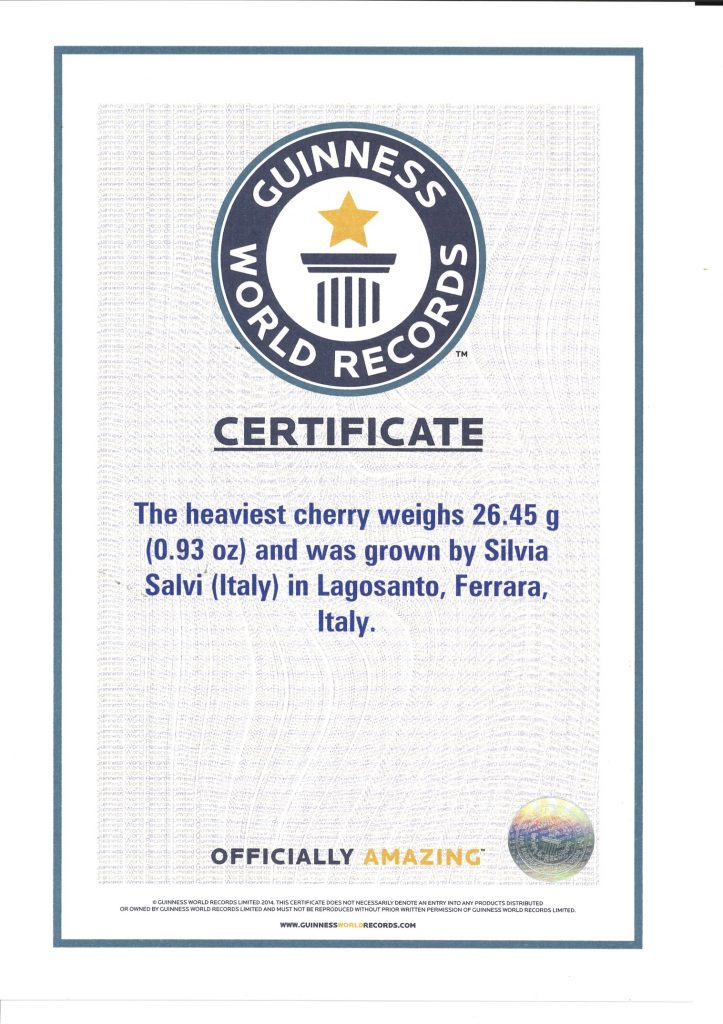 Guinness des Records - Sweet Stephany